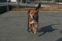 散歩20110223-1