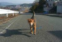 散歩20110223-3