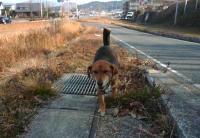 散歩20110223-4