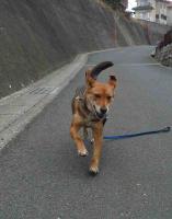 散歩20110224-3