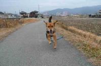 散歩20110224-4