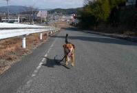 散歩20110225-3