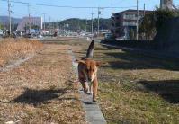 散歩20110226-2