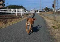 散歩20110226-3