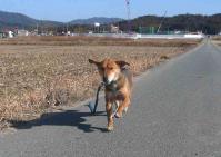 散歩20110226-4