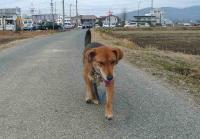 散歩20110227-3