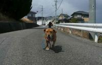 散歩20110326-1