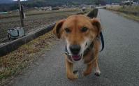 散歩20110326-3
