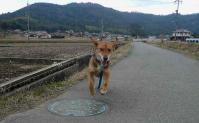 散歩20110326-4