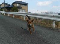 散歩20110327-1