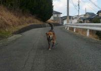 散歩20110327-2