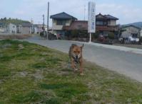 散歩20110327-5