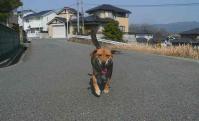 散歩20110329-1