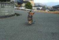 散歩20110330-2