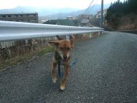 散歩20110330-3