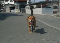 散歩20110330-4