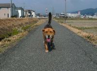 散歩20110330-5