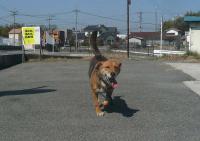 散歩20110331-1