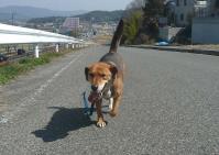 散歩20110331-2