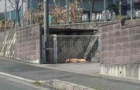 散歩20110331-4