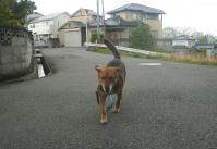 散歩20110428-1