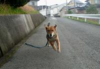 散歩20110428-2