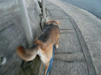 散歩20110428-4