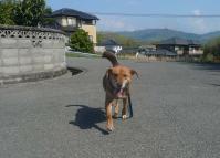 散歩20110429-1
