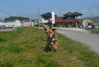 散歩20110429-3