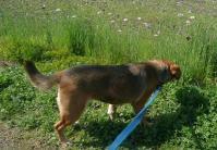 散歩20110429-4