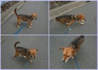 散歩20110430-1