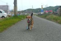 散歩20110430-2