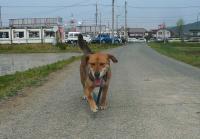 散歩20110430-4