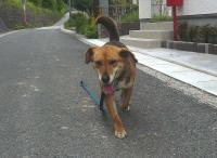 散歩20110527-1