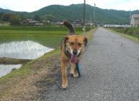 散歩20110527-4