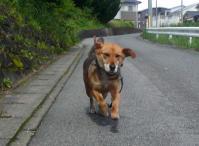 散歩20110530-1