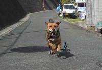 散歩20110530-2