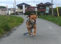 散歩20110530-4