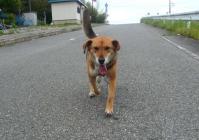 散歩20110531-1