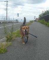 散歩20110726-1