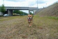 散歩20110726-2