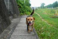 散歩20110728-1