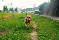 散歩20110728-2