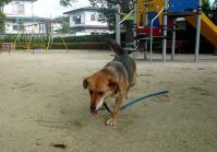 散歩20110728-3