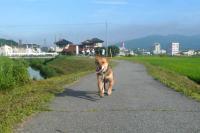 散歩20110729-1