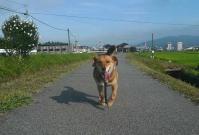 散歩20110729-2