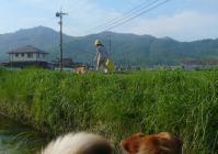 散歩20110729-3