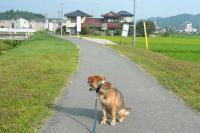 散歩20110730-1