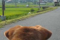 散歩20110730-3