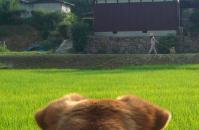 散歩20110730-4